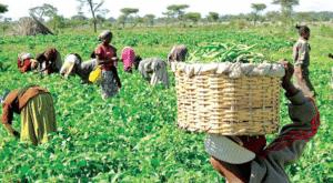 Nalda Registration Portal: Nigerian Young Farmers Scheme-How to Apply